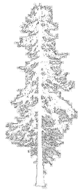 measuring a tree without using tangent Estimation of tree height: right triangle trigonometry   question: is there an efficient way to measure tree height, without heavy  equipment and.
